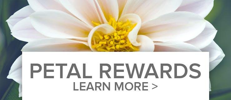 Petal Points Reward Program