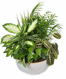 Five unique potted houseplants are artfully arranged in a large plastic dish
