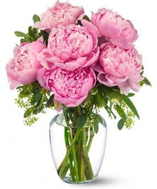 Six perfectly pink peonies - with their grand, ruffled blossoms