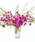 Purple Dendrobium Orchids in Vase
