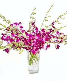 Purple Dendribium Orchids in Vase in Boston, MA