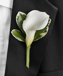 A crisp white Calla Lily