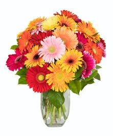 Happy flowers! Sending a gift of gerbera daisies is an ideal way to brighten someone's day