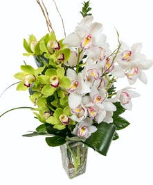 Cymbidium Orchid Vase