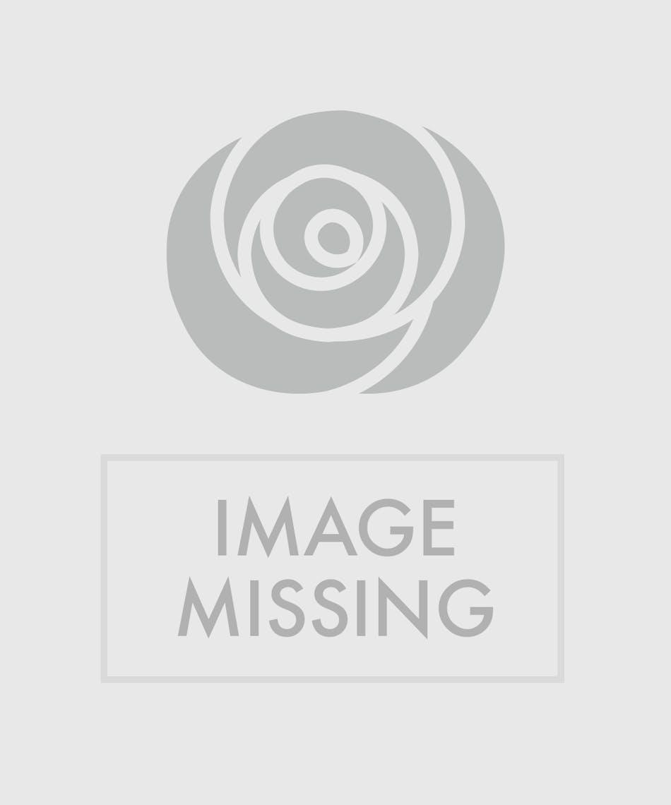 Cymbidium orchid vase in boston ma central square florist cymbidium orchid vase reviewsmspy