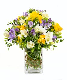 Freesia vase of blooms