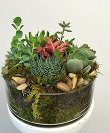 Features mixed succulents