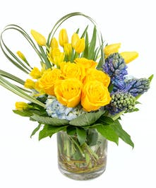 Tulip, Daffodil, Hyacinth, Hydrangea in Boston, MA - Central Square Florist