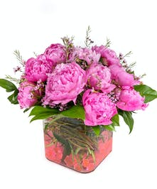 Perfect pink Peonies designed in a cube vase!