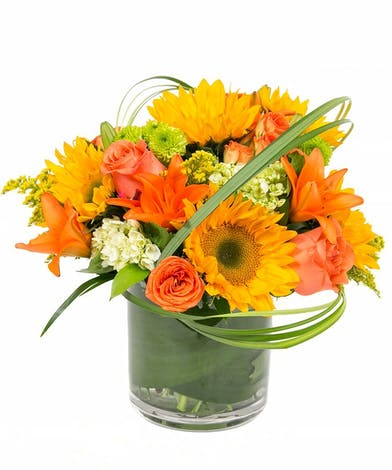 Autumn in Boston design features sunflowers, lilies and hydrangeas. Designed in a cylinder vase with a leaf-line. Bring in the joy of autumn in the city with this arrangement.