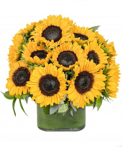 Sunflower Bouquet Boston, MA - Simple and sunny. This cheerful cube of sunflowers is sure to put a smile on their face!
