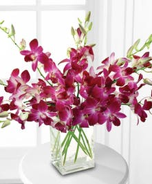 Make their Valentine's Day a lovely trip to the tropics!