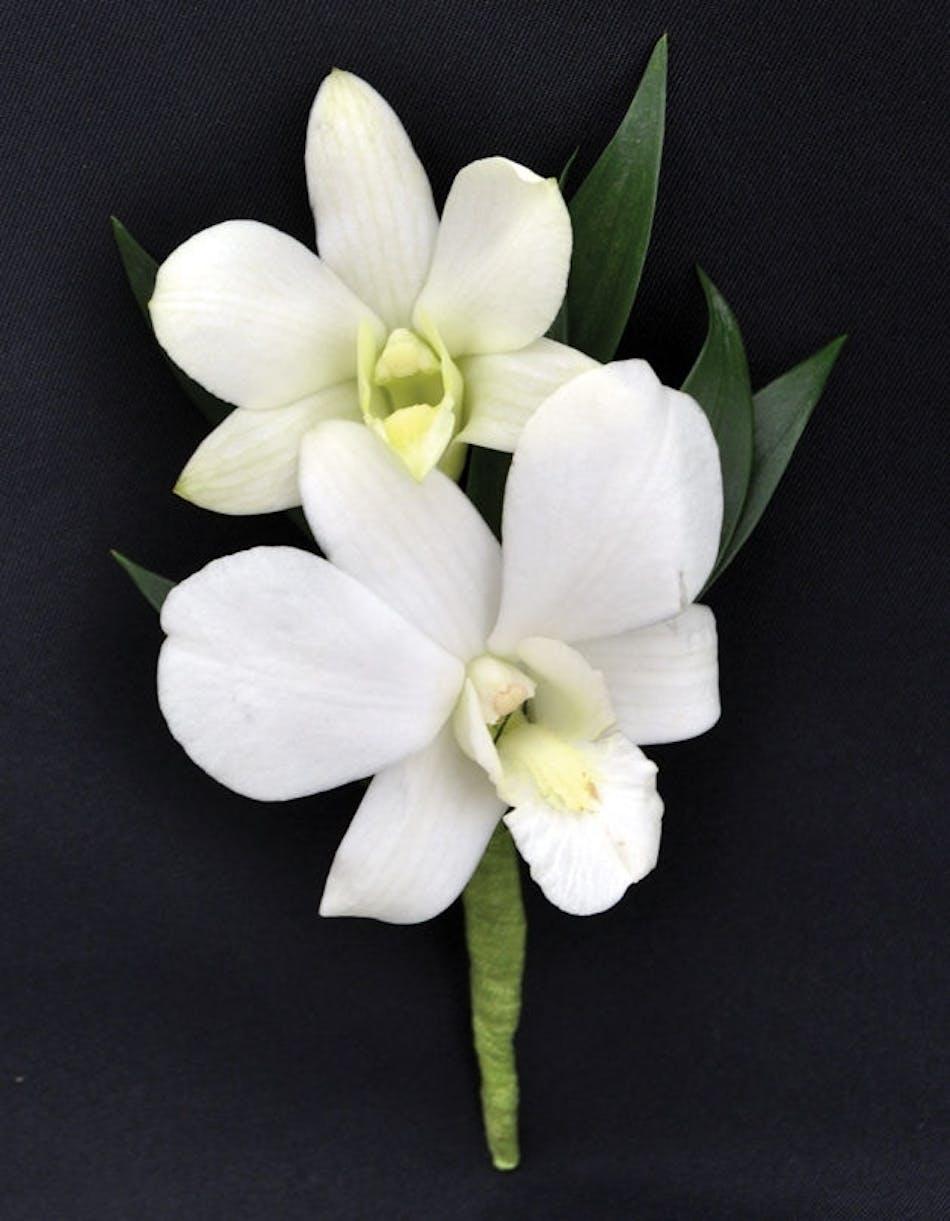 White Dendrobium Orchid Boutonniere In Boston Ma Central Square