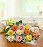 Multi-colored Roses