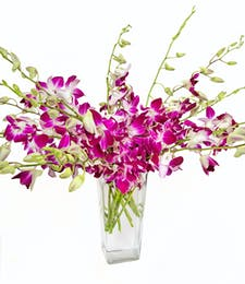 Purple Dendrobium Orchids in Vase