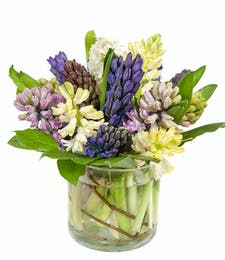 Fragrant Hyacinth