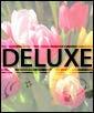 Deluxe - 50 Tulips