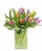 Standard - 20 Tulips
