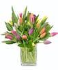 Premium - 30 Tulips