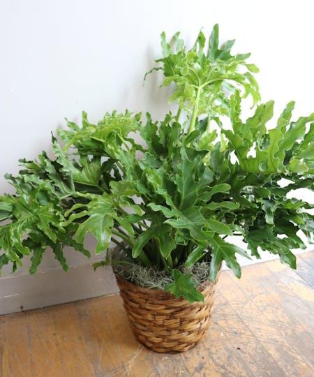 Commerical Office & Floor Plants