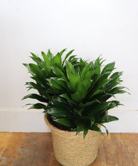 Commerical Office & Floor Plants