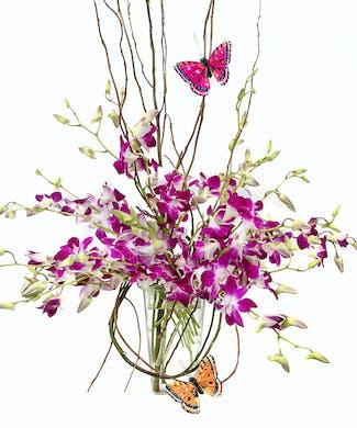 Purple Orchid Majesty