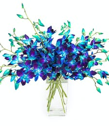 True Blue Orchids