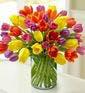 Standard - 40 Tulips